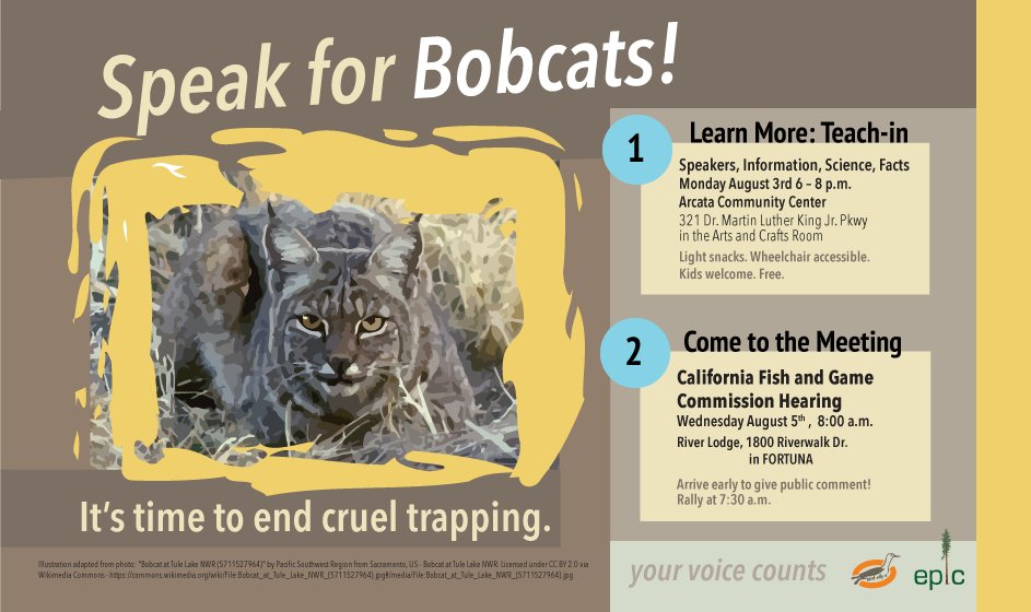 Bobcat-web-flyer
