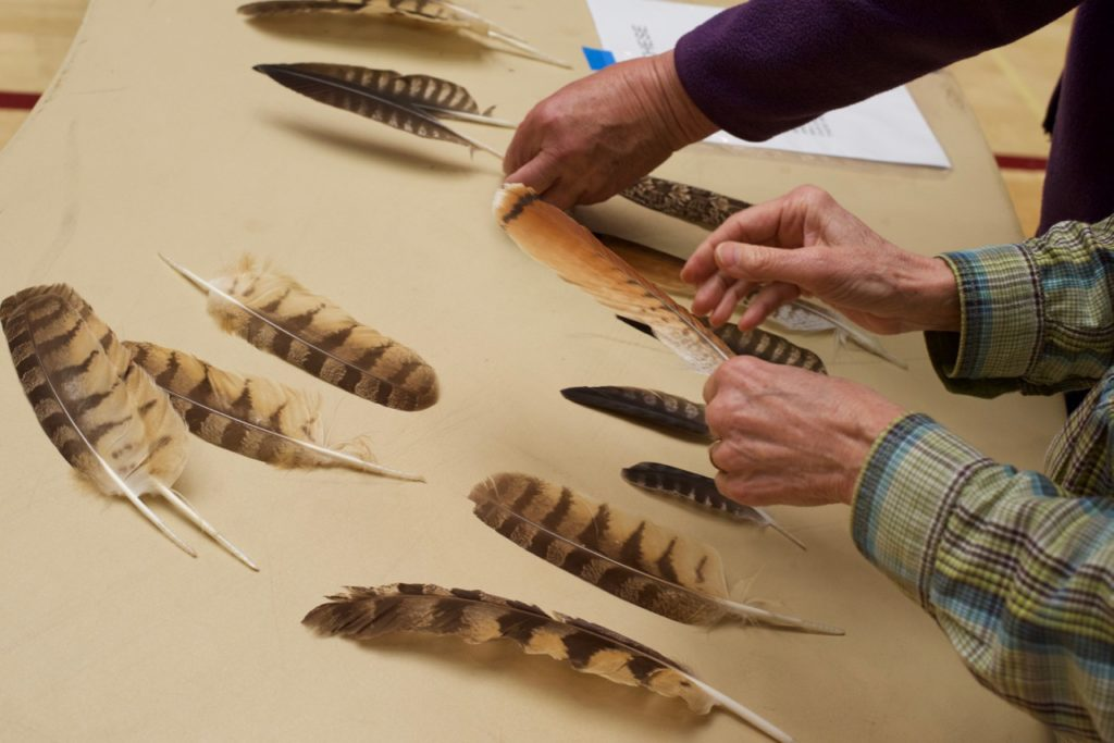 learn about feathers